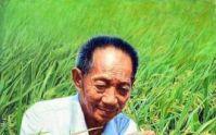 水稻之父 袁隆平